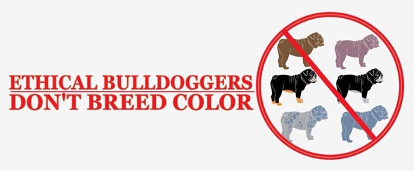 Bulldog Color Dilemna